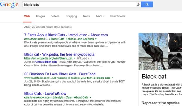 screenshot_cat_search_blog